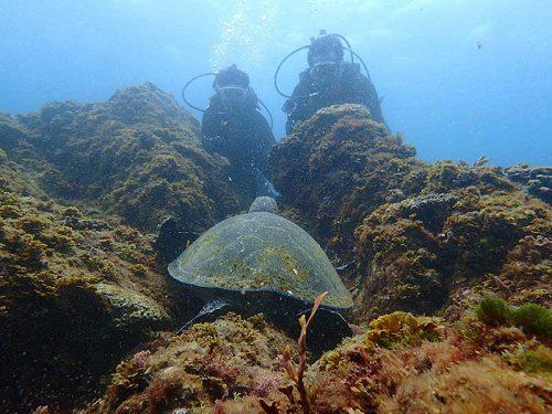 根上の隙間で休憩中のアオウミガメ