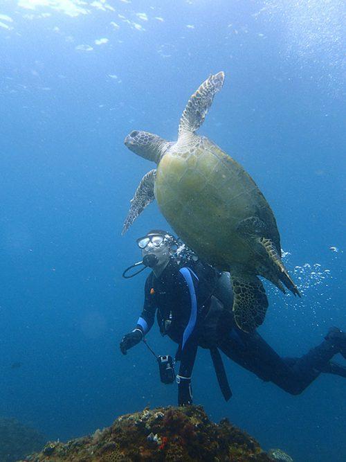 呼吸をしに泳いで上がるウミガメ見たり