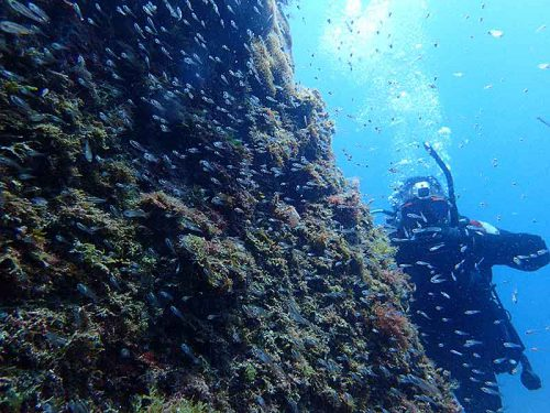 岩陰に群れてるちっこい魚達