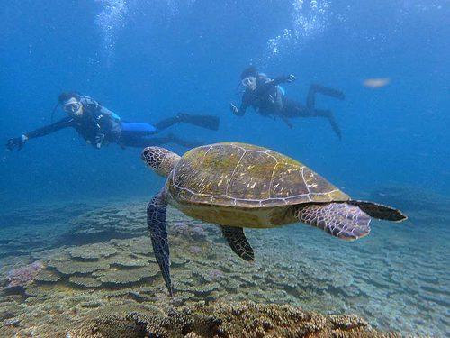 体験でウミガメと一緒にダイビング
