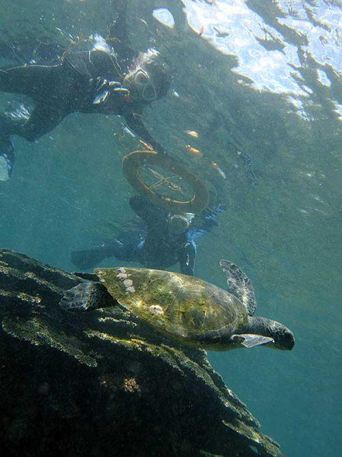 ちょっと沖出てウミガメ見てみて