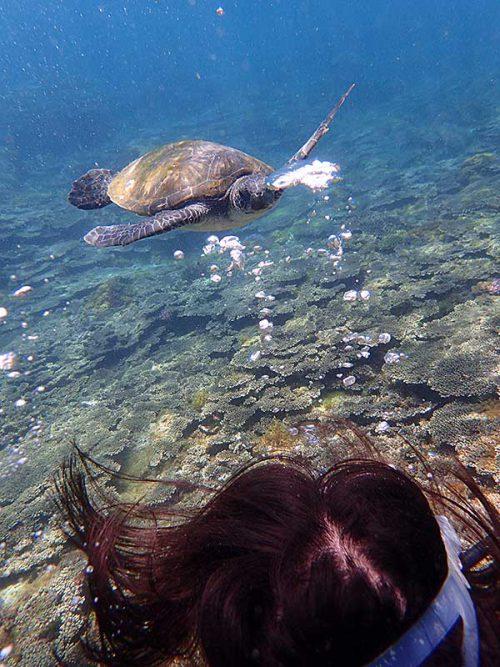 ウミガメと一瞬向き合ったり