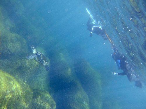 今日も上からウミガメ眺め