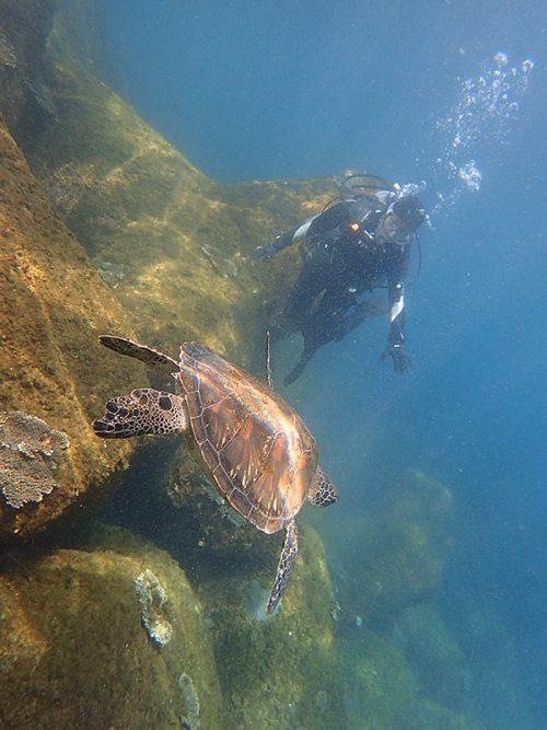 沖から戻ってきていたウミガメさん
