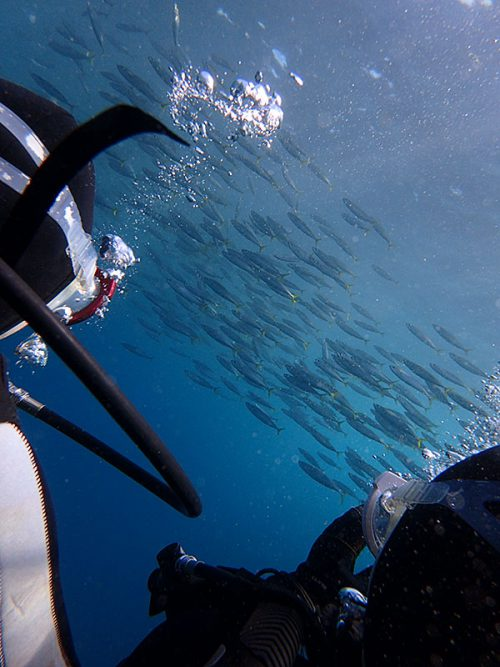 群れてる魚はムロアジで