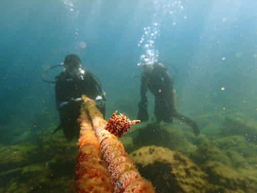 ロープに寄り添うカワハギの子ども