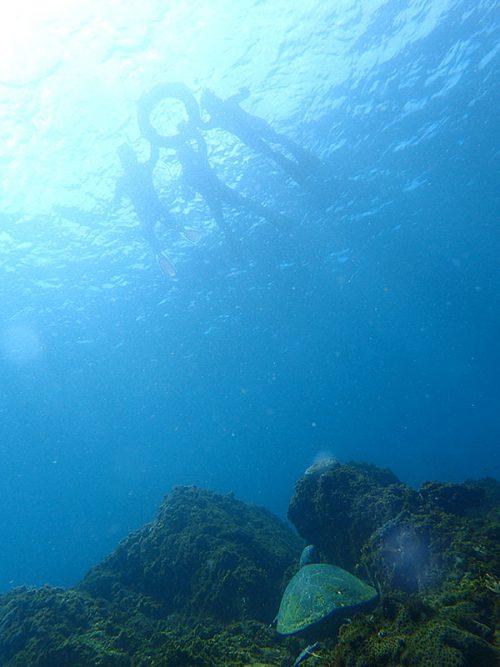 根上で休憩中だったアオウミガメ