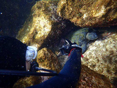 隙間のウミガメ撮ってみて