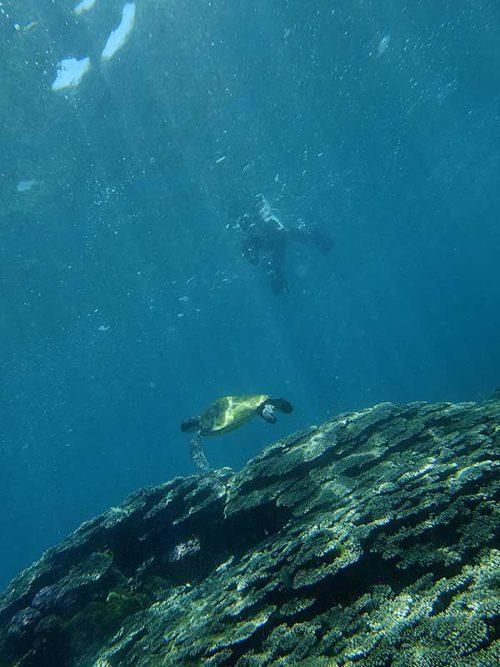 ウミガメ上から撮ったり見たりしてみたり