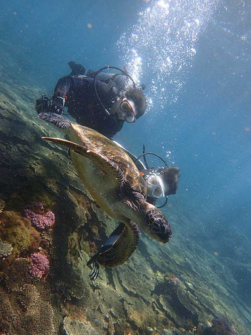 ウミガメと一緒に泳いで間近で眺め