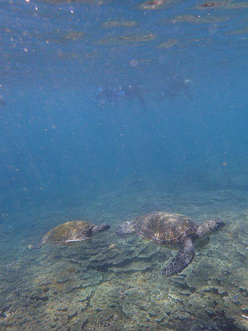 ウミガメたくさん底土の海で