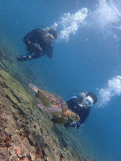 ちっこいウミガメと一緒に泳ぎ