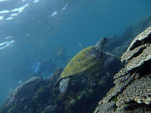 今日も底土でウミガメ探し