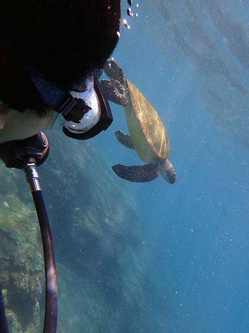 ウミガメと一緒に泳いで周っていきまして