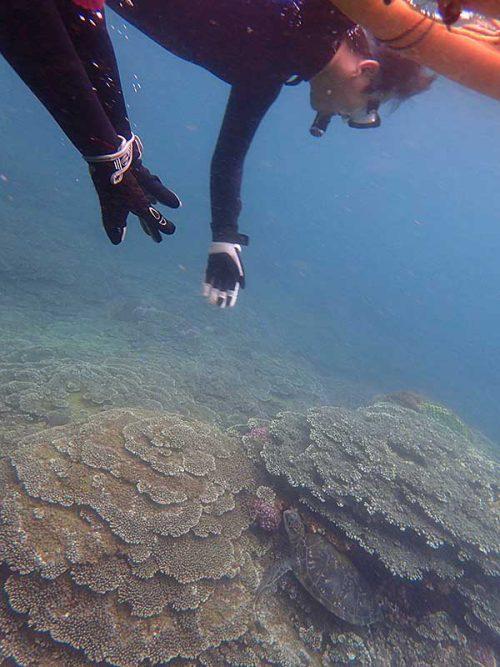 隙間に挟まるウミガメ見たり