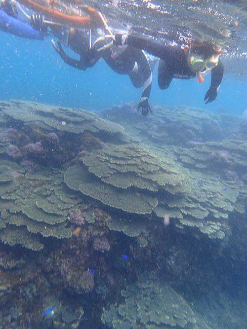 サンゴの上の魚を見ながら泳いでいって