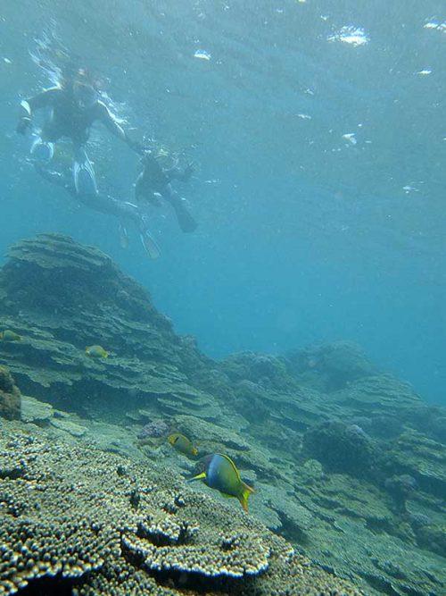 サンゴの上にはヤマブキベラとかおりまして