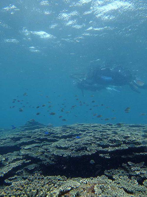 サンゴの上で群れてる魚も見て周り