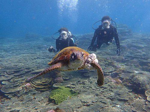 浅場をウミガメと一緒に泳いで周り