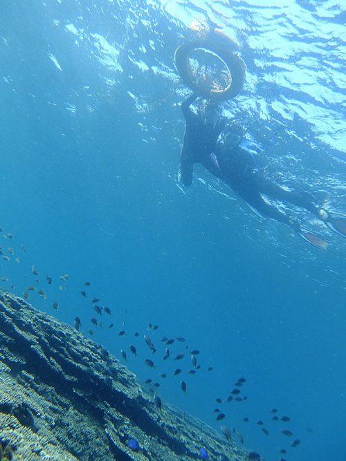 サンゴの上にはキホシスズメダイの子どももたくさんで