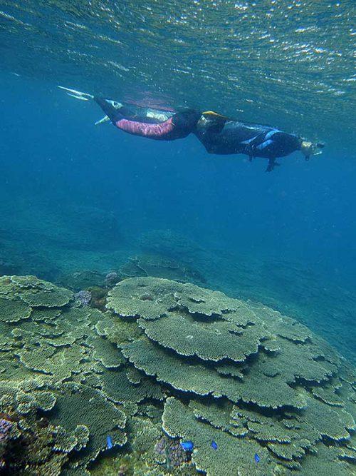 サンゴを見ながらのんびり泳いで周っていって