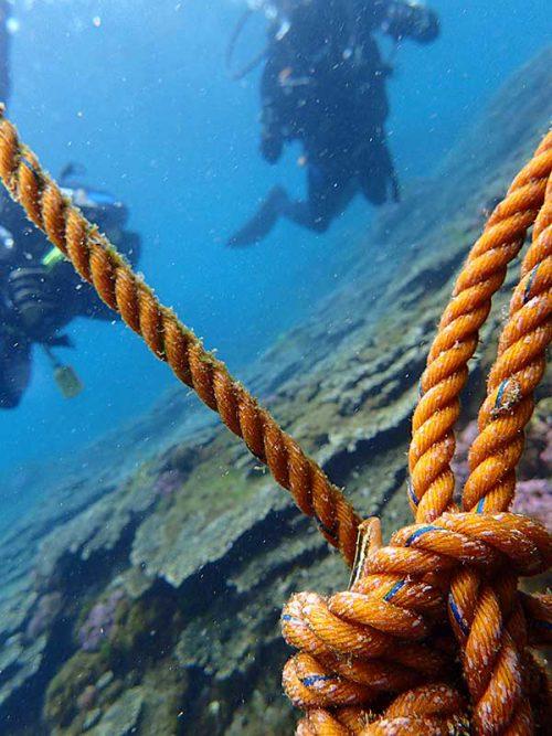 ロープについてるニジギンポ