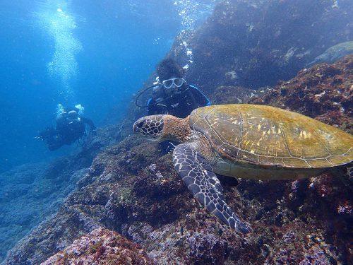 ゆっくり近づき近くウミガメ見てみたり
