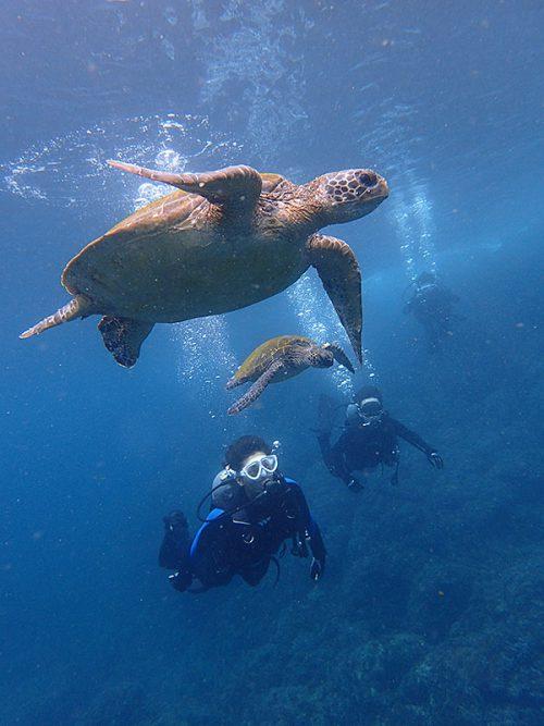 ウミガメ達と泳いで周り