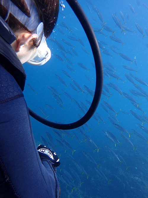 群れてる魚も見てみたり