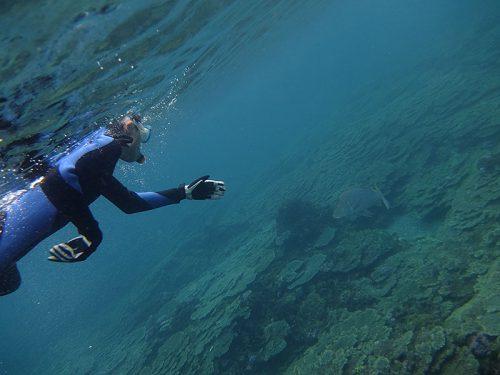 大きなハマフエフキとか見つつ泳いで行って