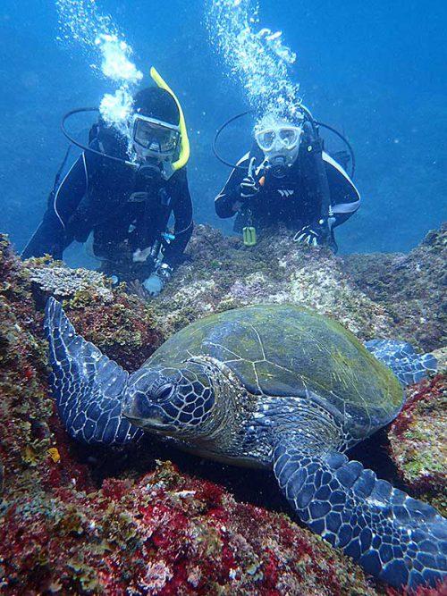 根上で休憩してたアオウミガメを近くで見たり