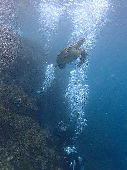 じっくり下からウミガメ見たり