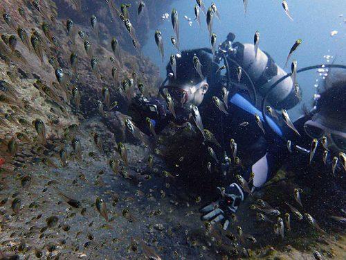 ちっこい魚が集まってたり