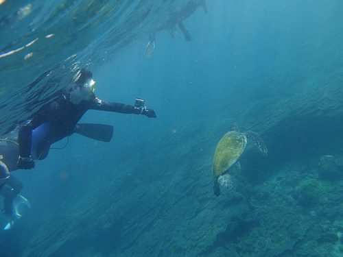 間近でウミガメ見られたり