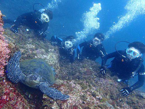 根上で休むウミガメ見てみて