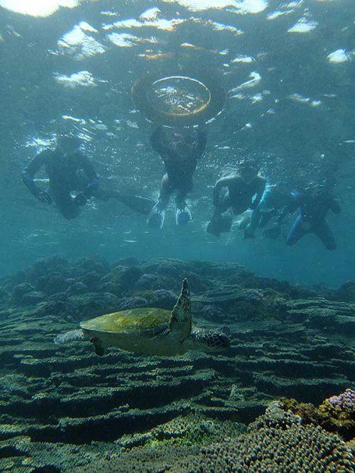 サンゴのところでウミガメ見たり