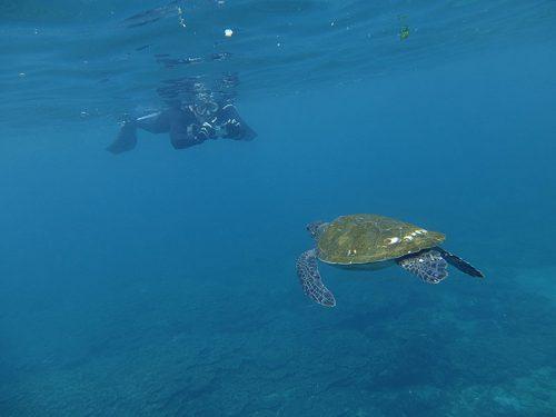 ウミガメと向かい合って写真も撮って