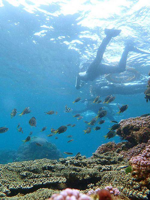 根上に集まる魚達も見て周り