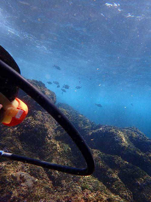 大きな魚とか見つつ沖に出ていき