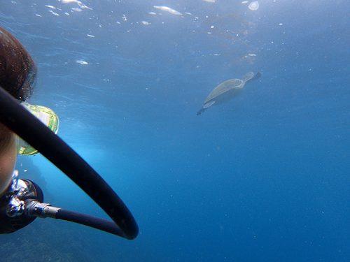 水面付近を泳いでたウミガメ見たり
