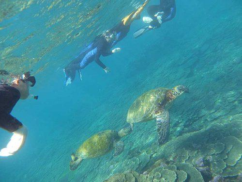 のんびりウミガメ見て周り