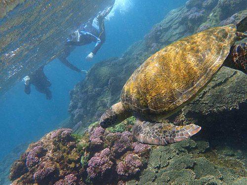 今日も底土でウミガメ見てみて