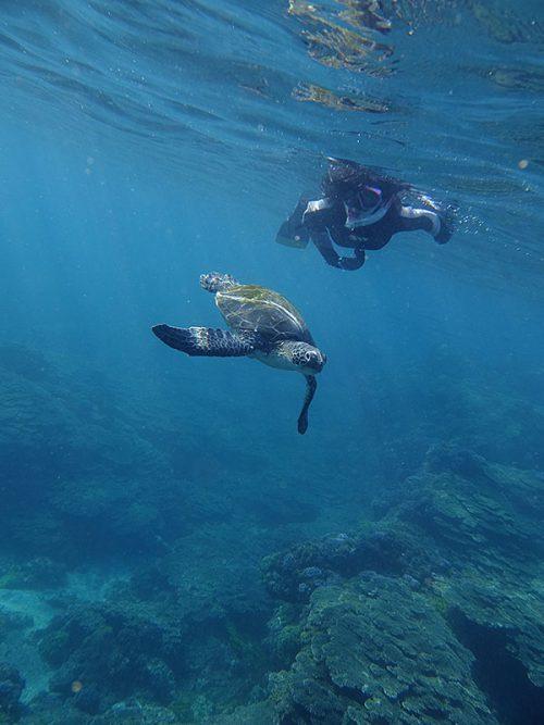 カメと一緒に泳いで周り
