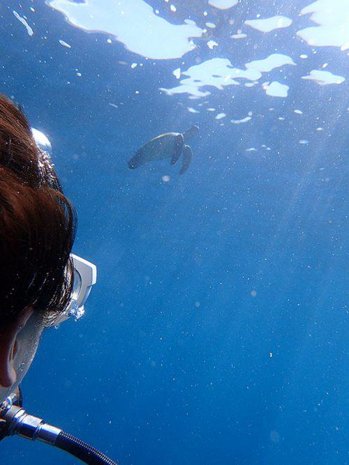 水面付近に上がっていってるウミガメ見たり