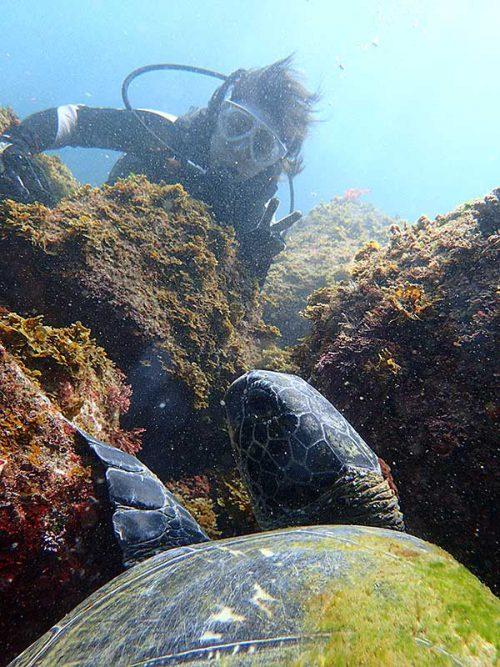 隙間にハマって休憩してたアオウミガメ