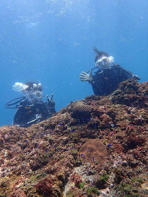 魚を見つつゆっくり潜って海に慣れていき