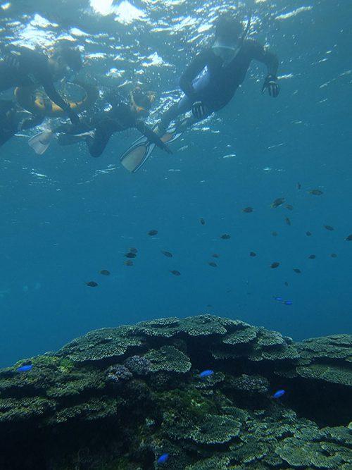 キホシスズメダイとかサンゴの上にたくさんで