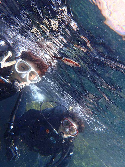 水面付近にはアオリイカの子ども見かけ