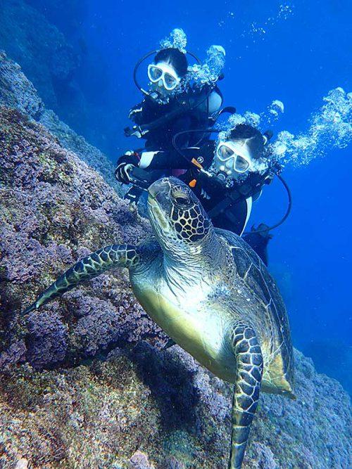 ゆっくり近づきじっくりウミガメ見て周り
