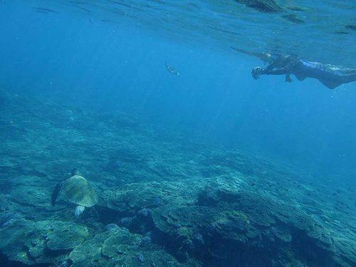サンゴのところに集まってきてたウミガメ眺め